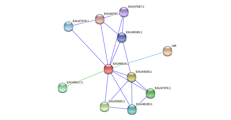 R2601_19190 protein (Pelagibaca bermudensis) - STRING interaction network