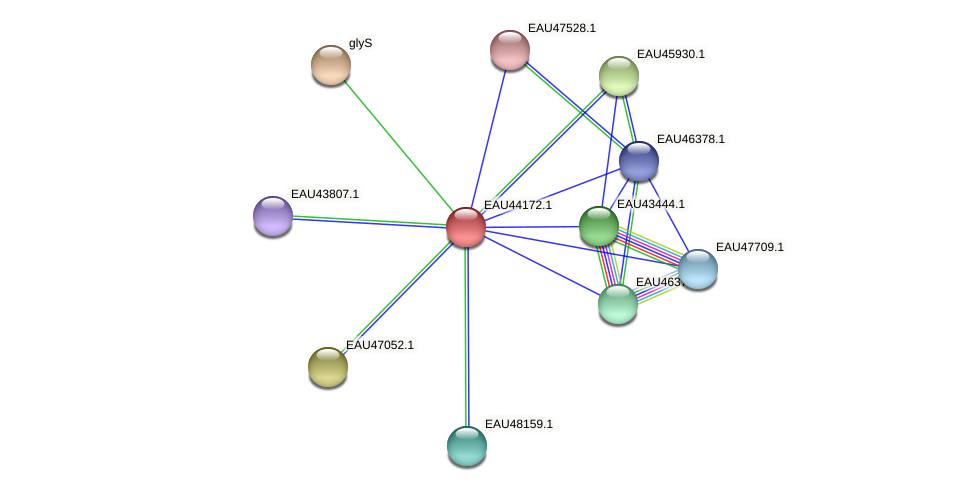 R2601_19337 protein (Pelagibaca bermudensis) - STRING interaction network