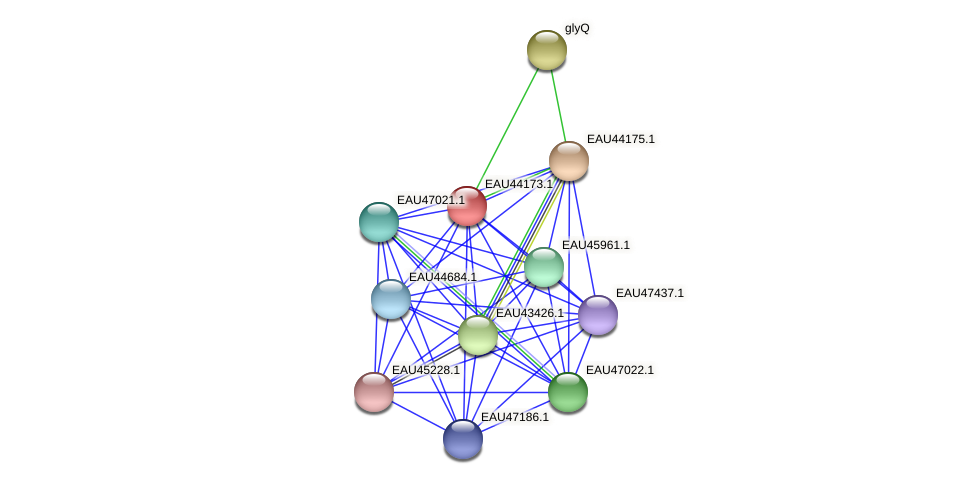R2601_19342 protein (Pelagibaca bermudensis) - STRING interaction network