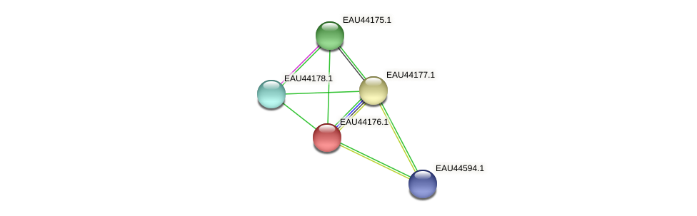 R2601_19357 protein (Pelagibaca bermudensis) - STRING interaction network