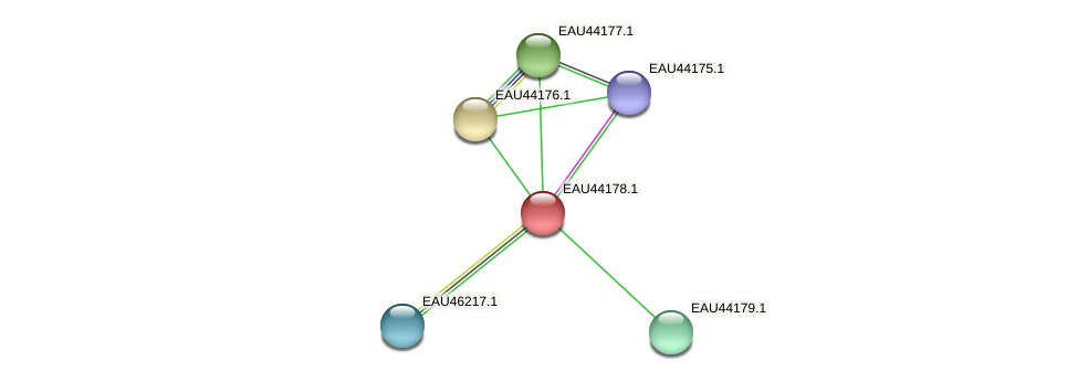 R2601_19367 protein (Pelagibaca bermudensis) - STRING interaction network