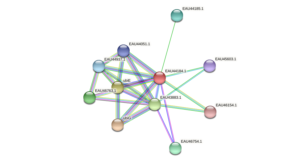 R2601_19397 protein (Pelagibaca bermudensis) - STRING interaction network