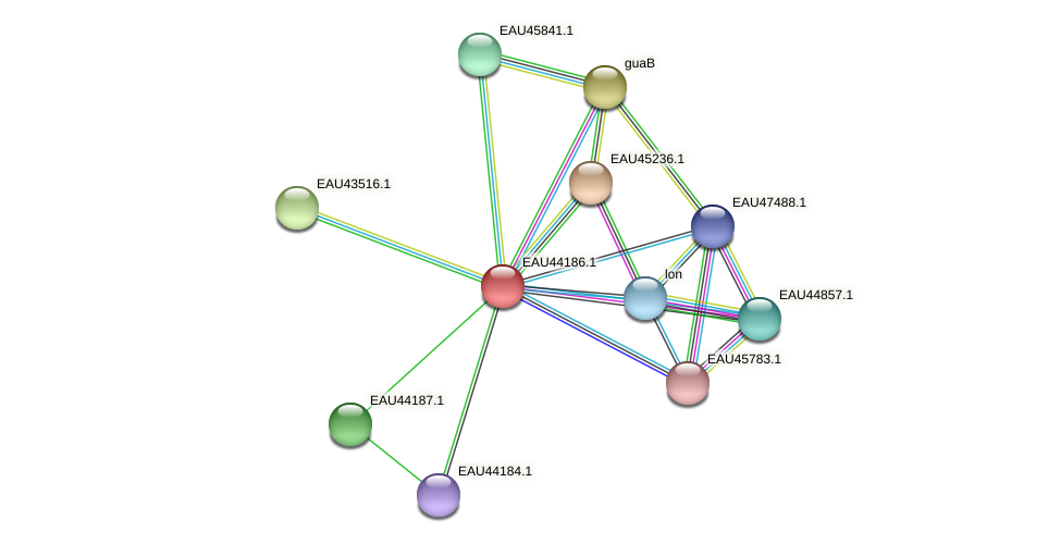 R2601_19407 protein (Pelagibaca bermudensis) - STRING interaction network