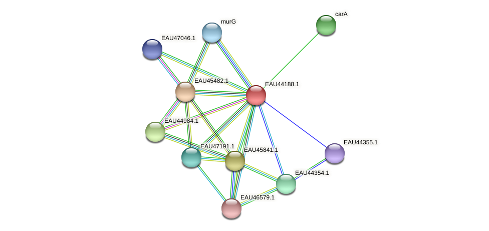 R2601_19417 protein (Pelagibaca bermudensis) - STRING interaction network
