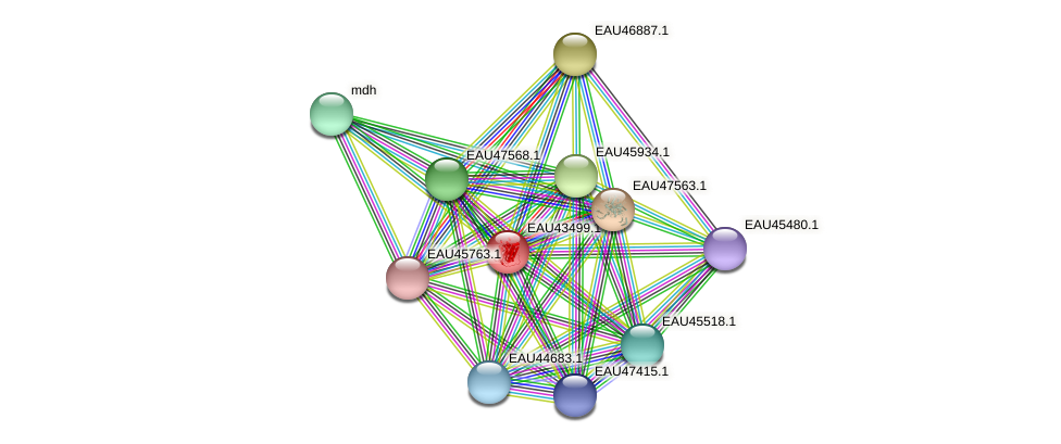 R2601_19502 protein (Pelagibaca bermudensis) - STRING interaction network