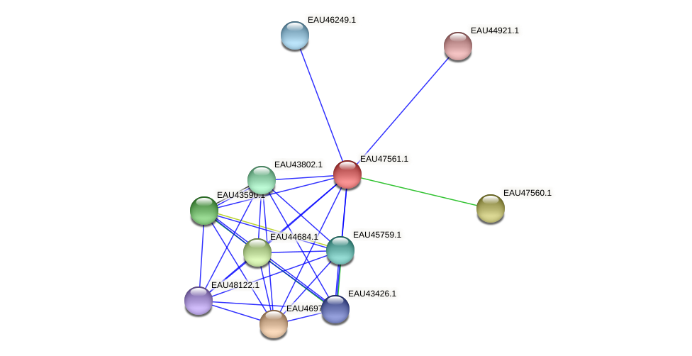 R2601_19529 protein (Pelagibaca bermudensis) - STRING interaction network