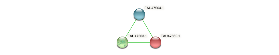 R2601_19534 protein (Pelagibaca bermudensis) - STRING interaction network