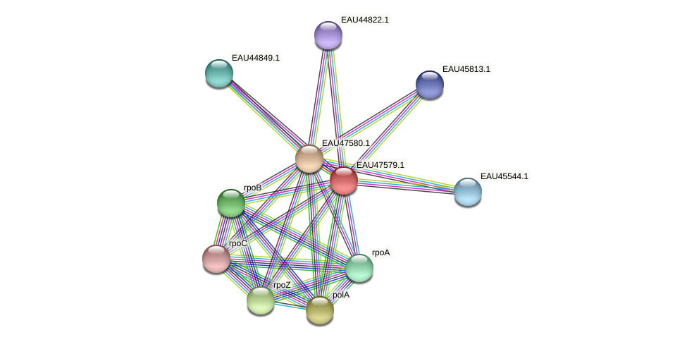 R2601_19619 protein (Pelagibaca bermudensis) - STRING interaction network