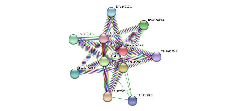 R2601_19734 protein (Pelagibaca bermudensis) - STRING interaction network