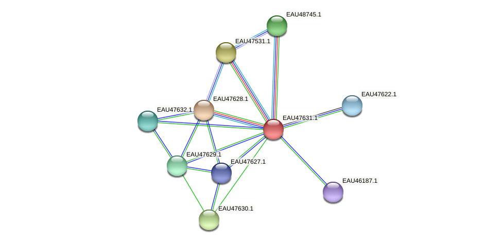 R2601_19879 protein (Pelagibaca bermudensis) - STRING interaction network