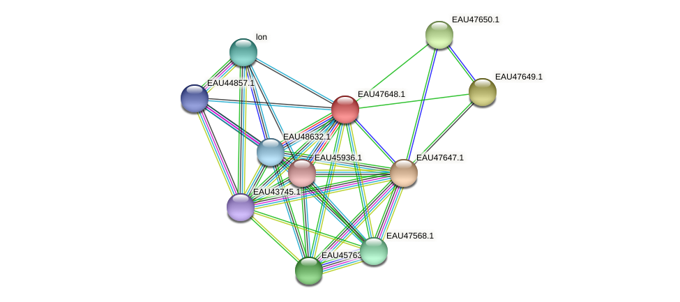 R2601_19964 protein (Pelagibaca bermudensis) - STRING interaction network