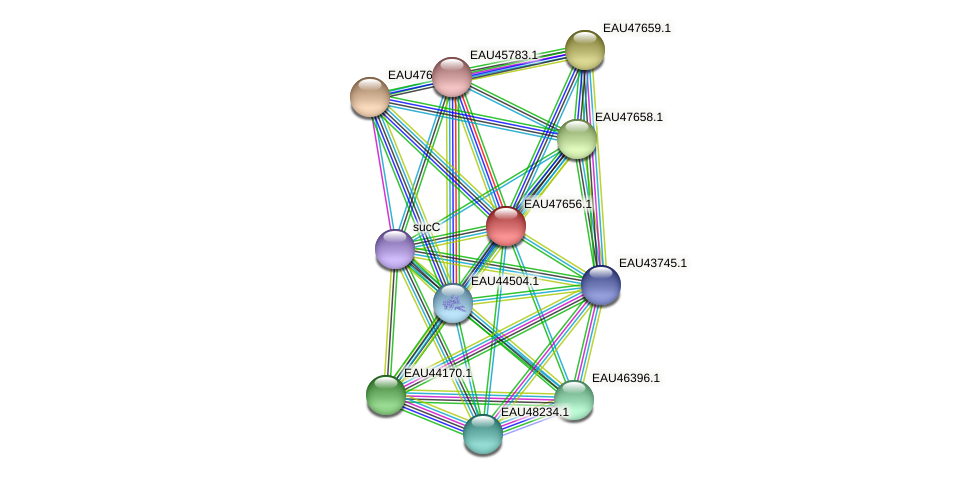 R2601_20004 protein (Pelagibaca bermudensis) - STRING interaction network
