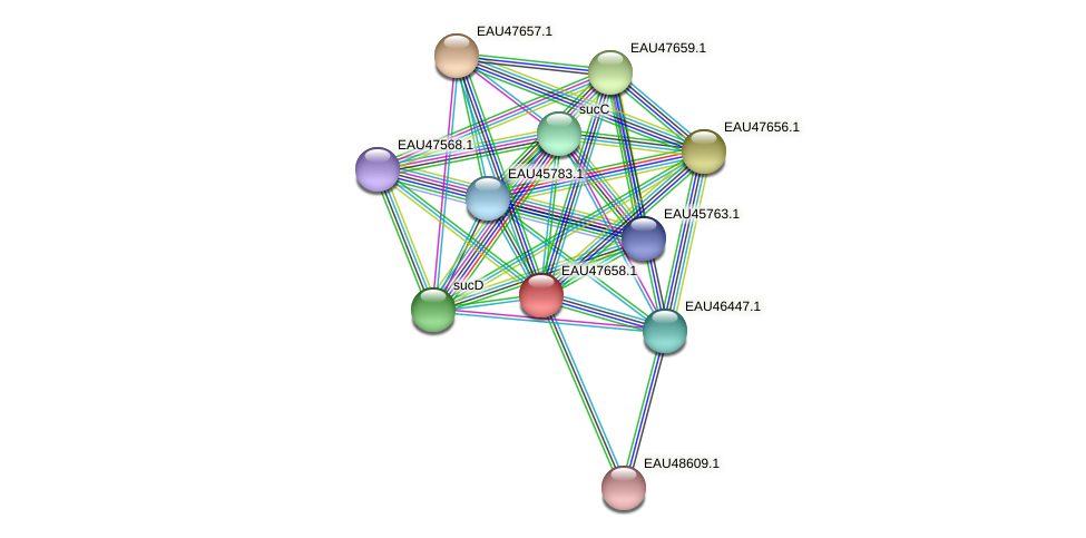 R2601_20014 protein (Pelagibaca bermudensis) - STRING interaction network