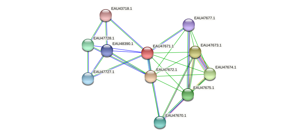 R2601_20079 protein (Pelagibaca bermudensis) - STRING interaction network