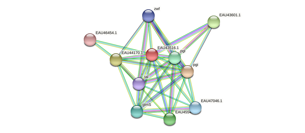 R2601_20326 protein (Pelagibaca bermudensis) - STRING interaction network