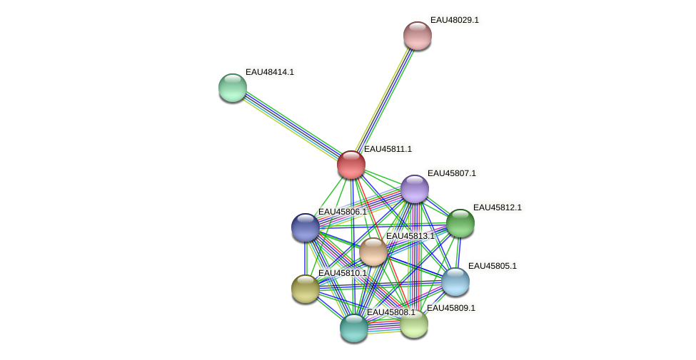 R2601_20426 protein (Pelagibaca bermudensis) - STRING interaction network