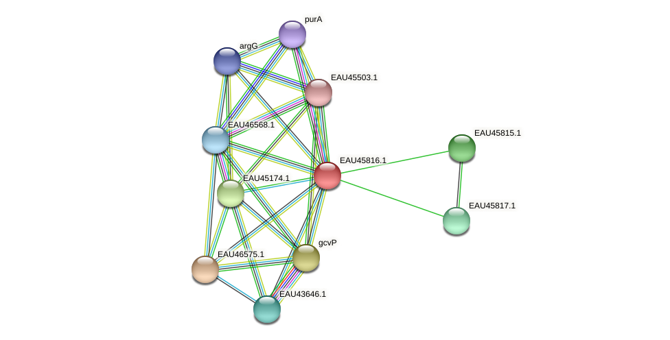 R2601_20451 protein (Pelagibaca bermudensis) - STRING interaction network