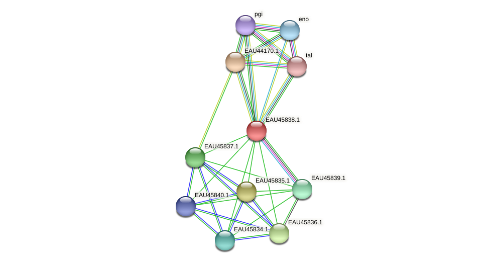 R2601_20561 protein (Pelagibaca bermudensis) - STRING interaction network