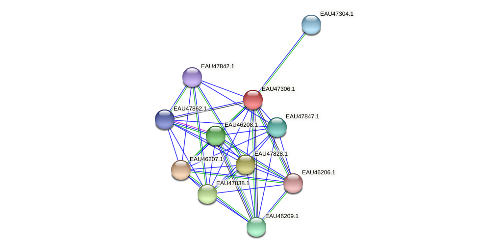 R2601_20881 protein (Pelagibaca bermudensis) - STRING interaction network