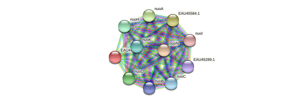R2601_20891 protein (Pelagibaca bermudensis) - STRING interaction network