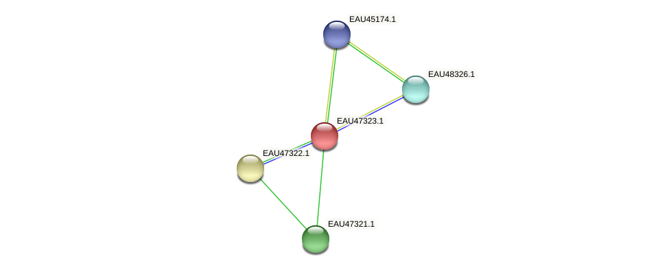 R2601_20966 protein (Pelagibaca bermudensis) - STRING interaction network
