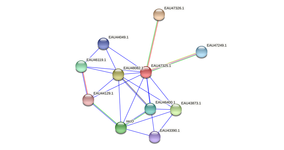R2601_20976 protein (Pelagibaca bermudensis) - STRING interaction network