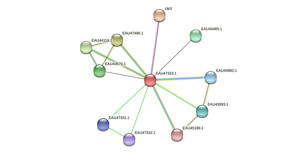 R2601_21016 protein (Pelagibaca bermudensis) - STRING interaction network