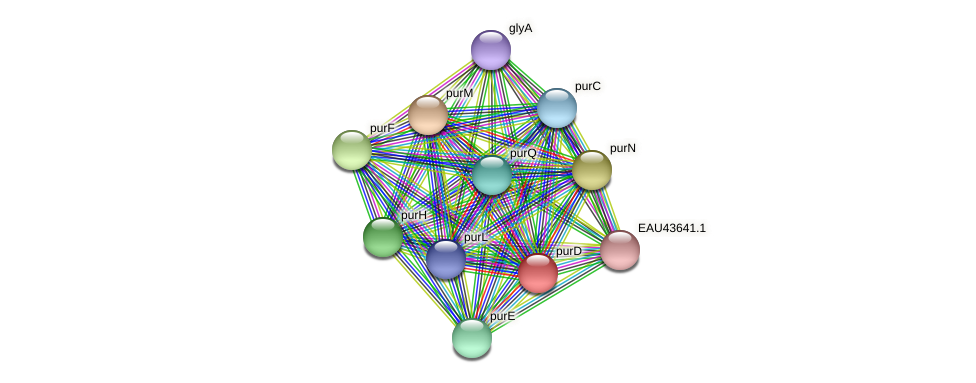 purD protein (Pelagibaca bermudensis) - STRING interaction network