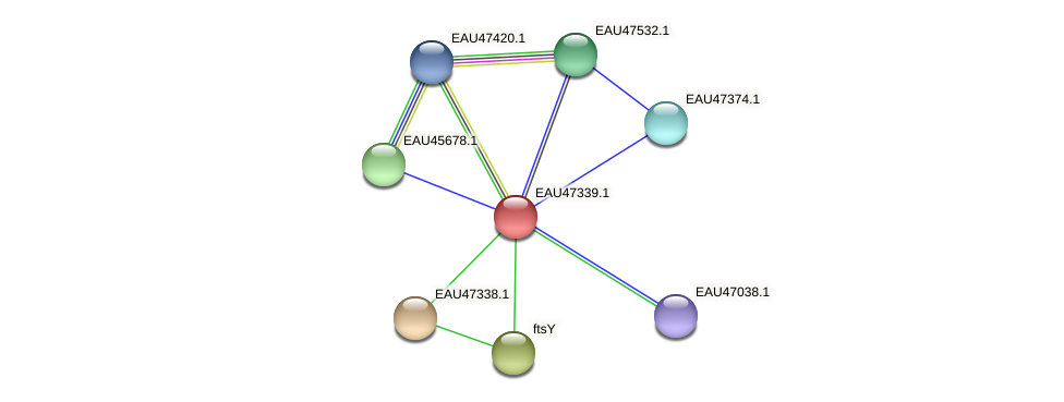 R2601_21046 protein (Pelagibaca bermudensis) - STRING interaction network