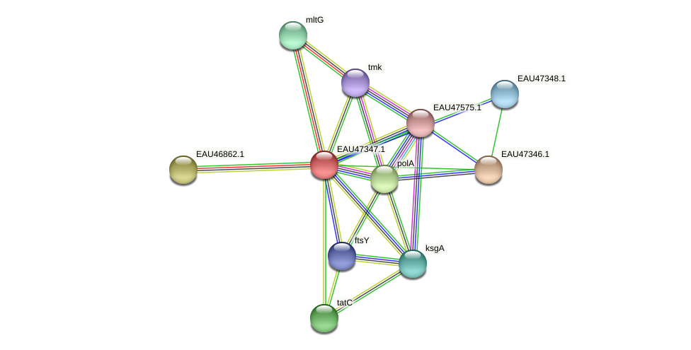 R2601_21086 protein (Pelagibaca bermudensis) - STRING interaction network