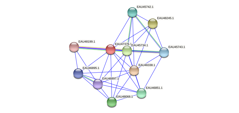 R2601_21231 protein (Pelagibaca bermudensis) - STRING interaction network