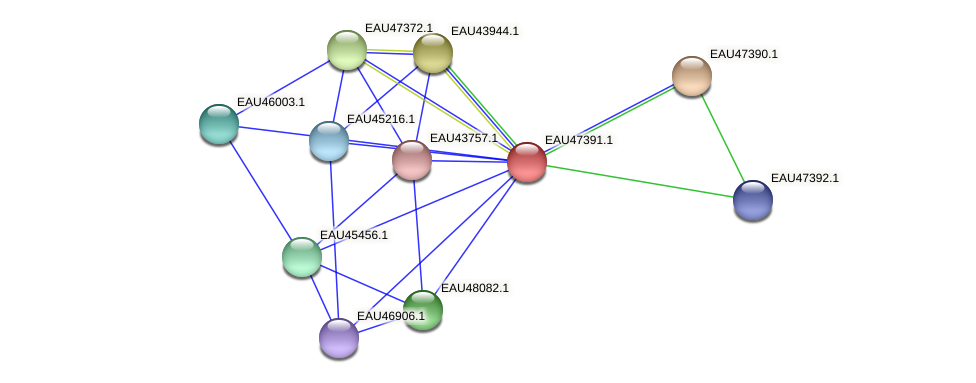 R2601_21306 protein (Pelagibaca bermudensis) - STRING interaction network