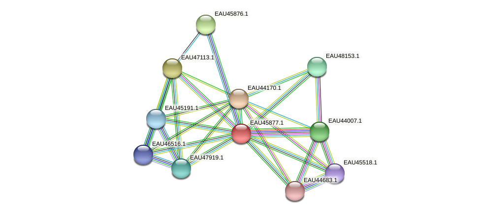 R2601_21442 protein (Pelagibaca bermudensis) - STRING interaction network