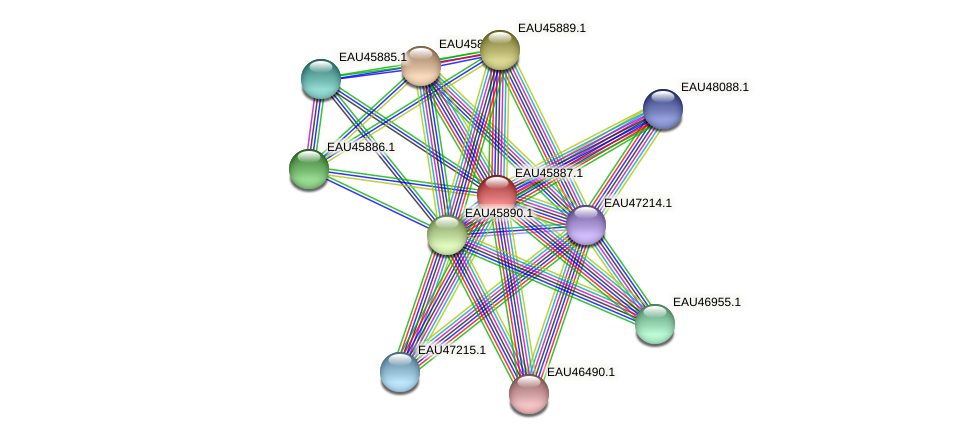 R2601_21492 protein (Pelagibaca bermudensis) - STRING interaction network