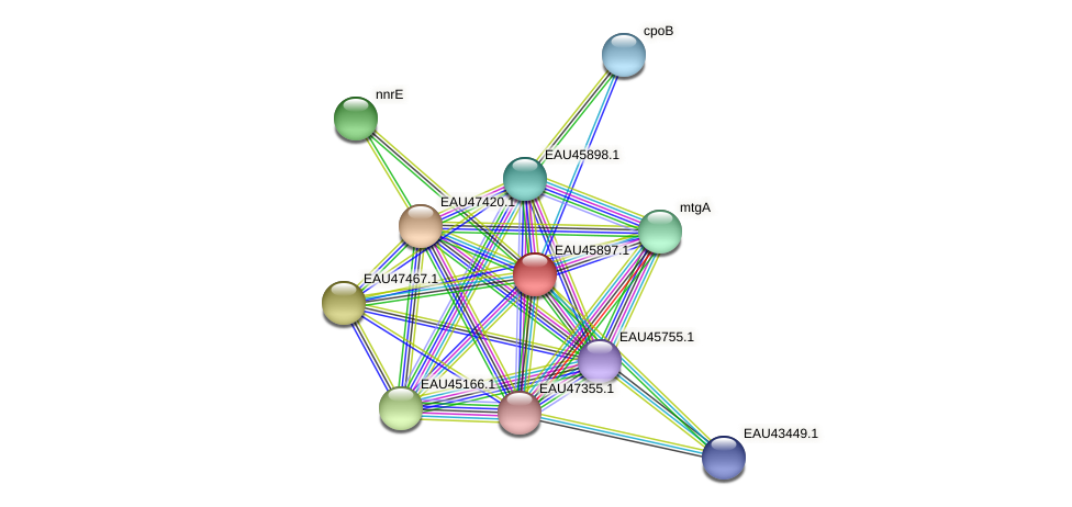 R2601_21542 protein (Pelagibaca bermudensis) - STRING interaction network