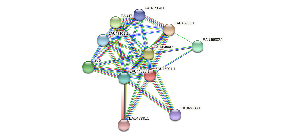 R2601_21562 protein (Pelagibaca bermudensis) - STRING interaction network
