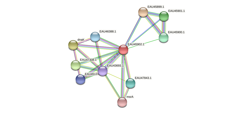 R2601_21567 protein (Pelagibaca bermudensis) - STRING interaction network