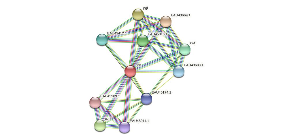 R2601_21647 protein (Pelagibaca bermudensis) - STRING interaction network