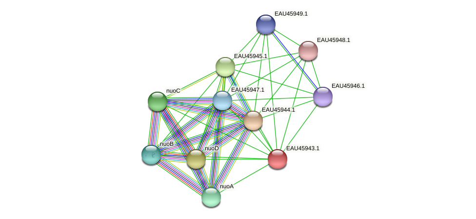 R2601_21772 protein (Pelagibaca bermudensis) - STRING interaction network