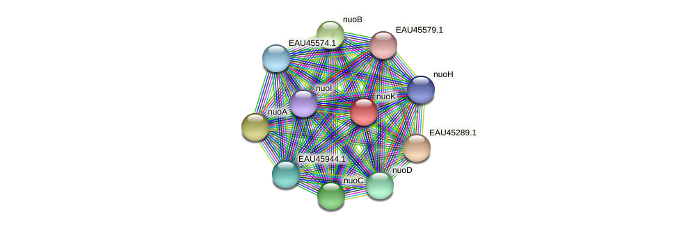 nuoK protein (Pelagibaca bermudensis) - STRING interaction network