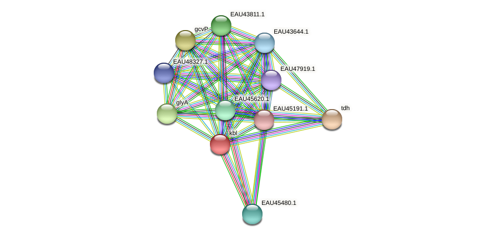 kbl protein (Pelagibaca bermudensis) - STRING interaction network