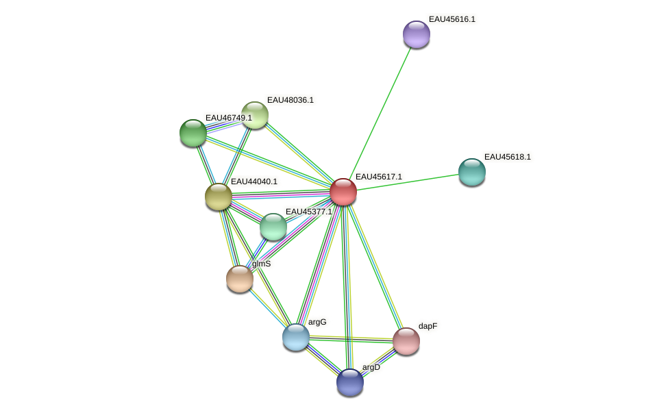 R2601_22027 protein (Pelagibaca bermudensis) - STRING interaction network