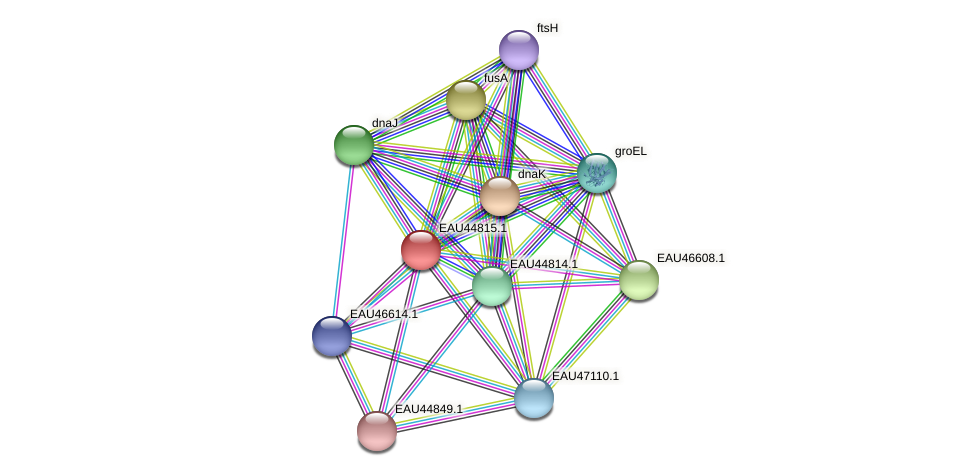 R2601_22267 protein (Pelagibaca bermudensis) - STRING interaction network
