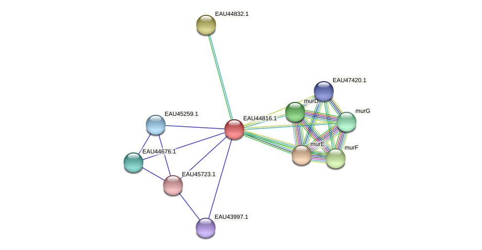 R2601_22272 protein (Pelagibaca bermudensis) - STRING interaction network