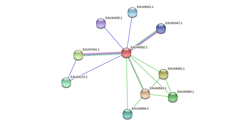 R2601_22427 protein (Pelagibaca bermudensis) - STRING interaction network
