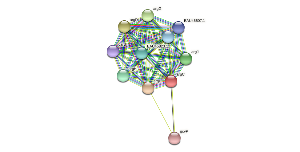 R2601_22631 protein (Pelagibaca bermudensis) - STRING interaction network
