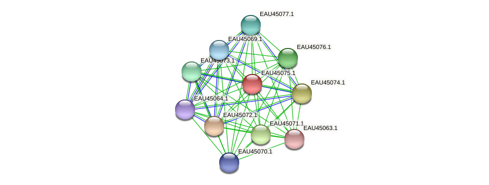 R2601_22851 protein (Pelagibaca bermudensis) - STRING interaction network