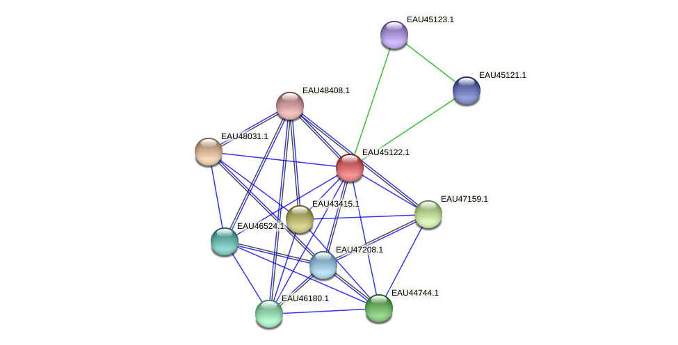 R2601_23086 protein (Pelagibaca bermudensis) - STRING interaction network