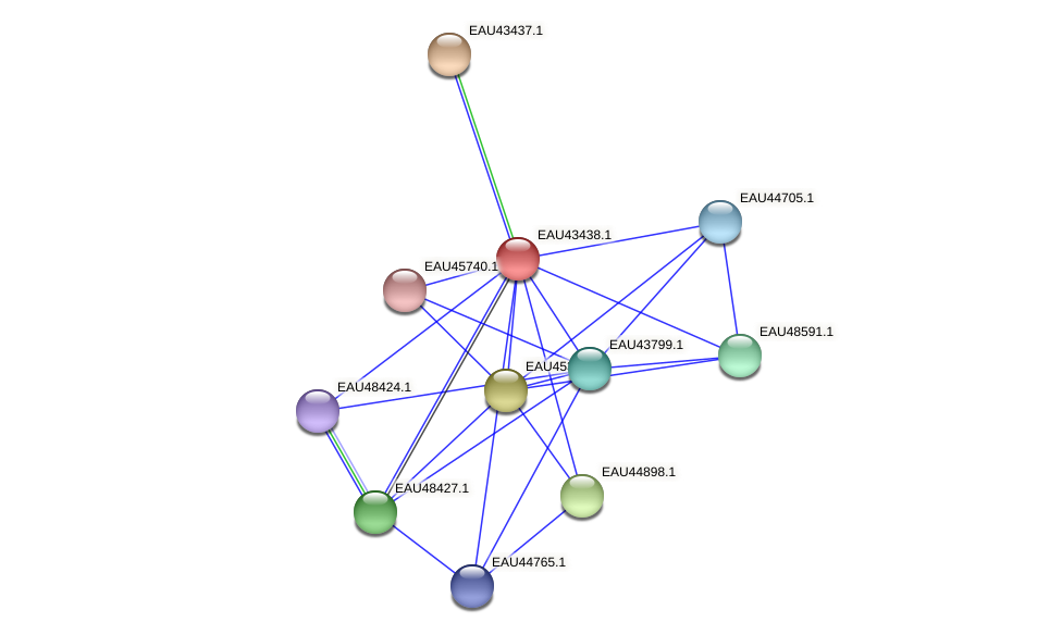 R2601_23113 protein (Pelagibaca bermudensis) - STRING interaction network