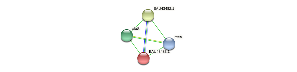 R2601_23358 protein (Pelagibaca bermudensis) - STRING interaction network